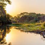 Comissão de Meio Ambiente da OAB SP assina Carta em defesa do Pantanal Matogrossense
