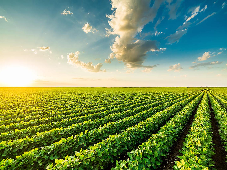 Comissão de Agronegócios da OAB SP apoia a sojicultura brasileira e rebate declaração de Macron