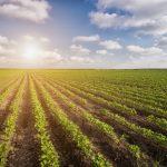 Macron e sua campanha contra o agronegócio brasileiro