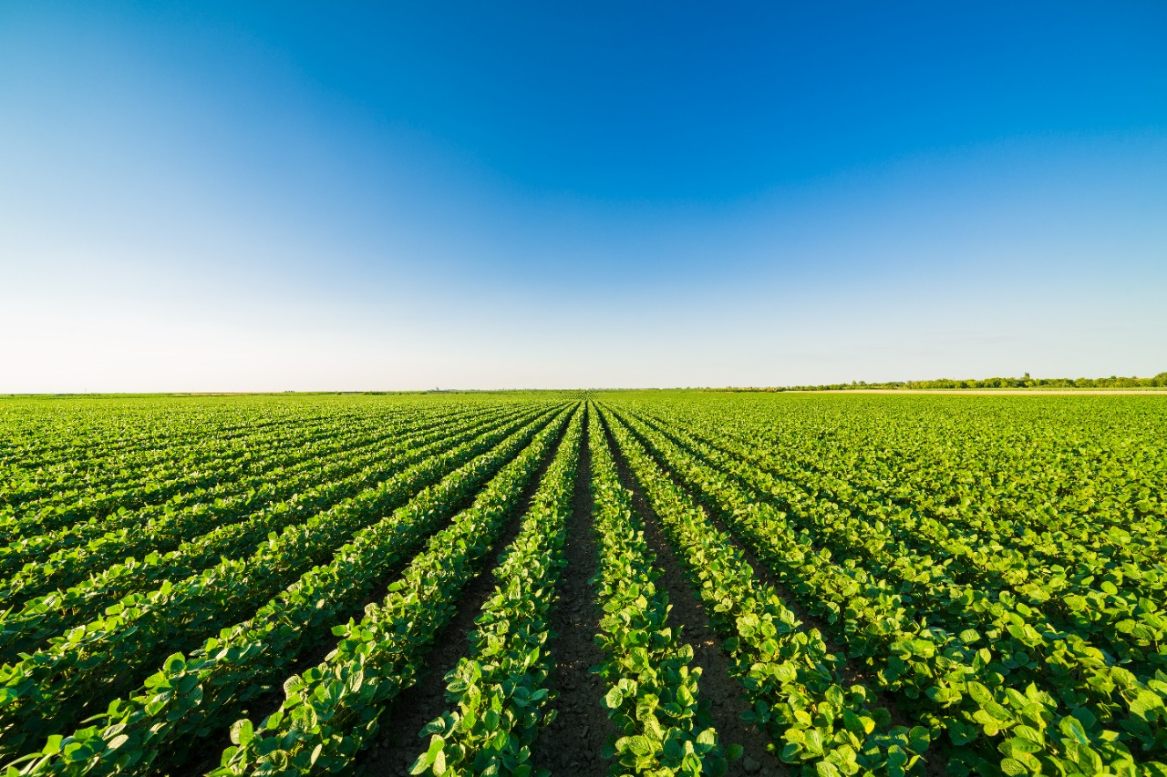 Nota da Comissão de Agronegócios e Relações Agrárias da OAB SP relativa à derrubada integral dos vetos à Lei 14.130/2021